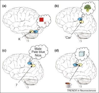 Synaesthesia and cortical connectivity: Trends in