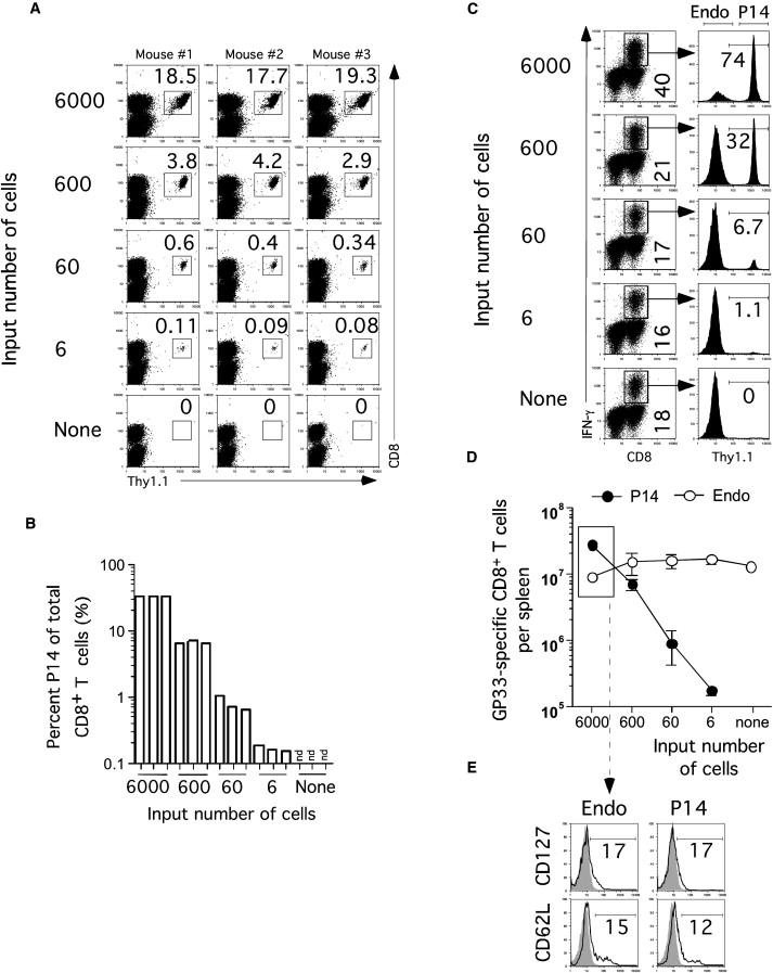 Initial T Cell Receptor Transgenic Cell Precursor
