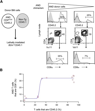 Upregulation of CD4 Expression during MHC Class II