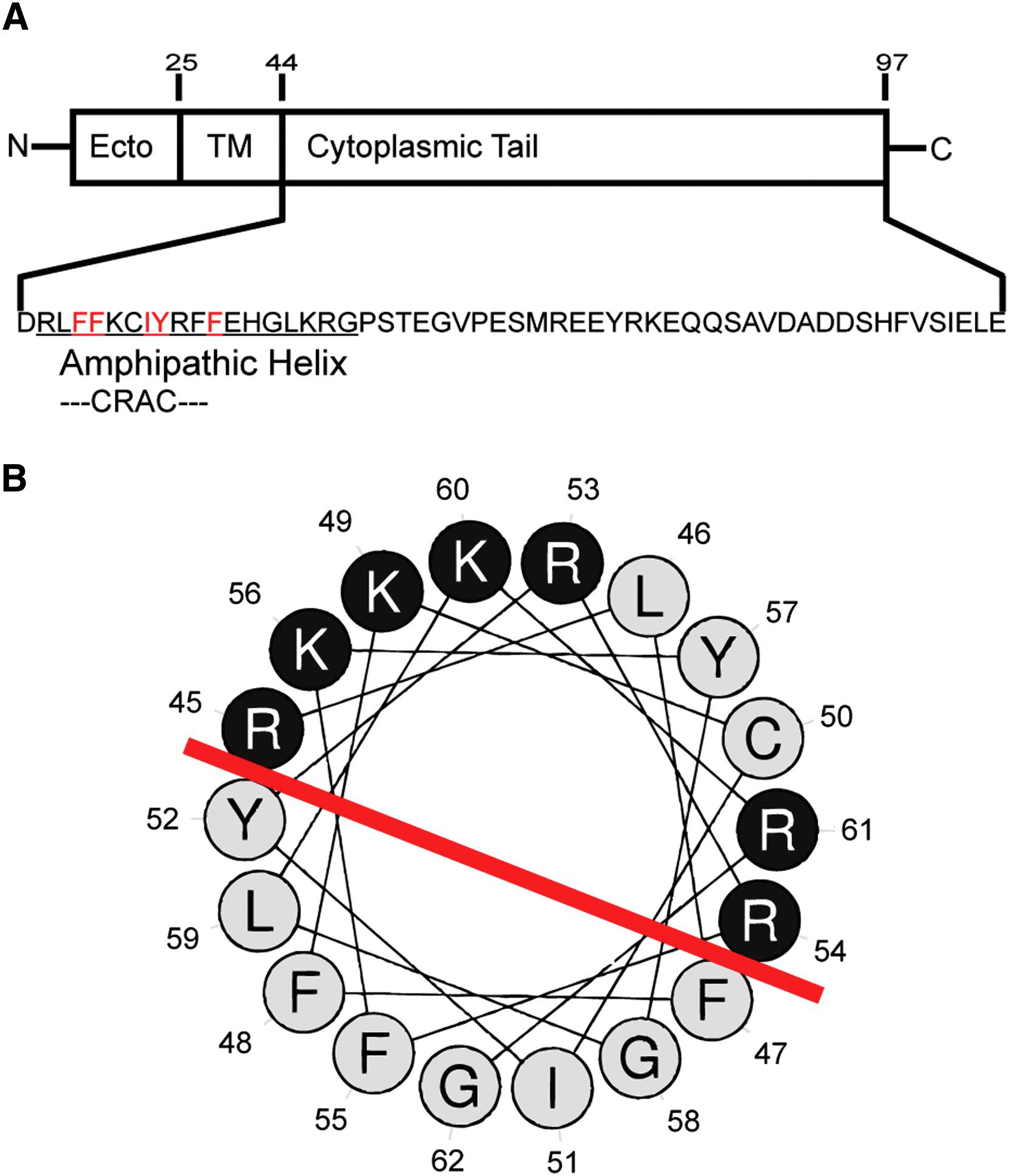 Influenza Virus M2 Protein Mediates Escrt Independent