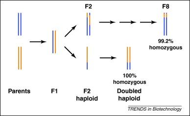 Chromosome engineering: power tools for plant genetics