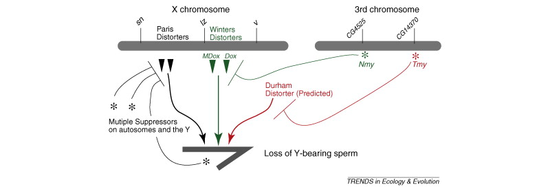 Genetic conflict and sex chromosome evolution: Trends in
