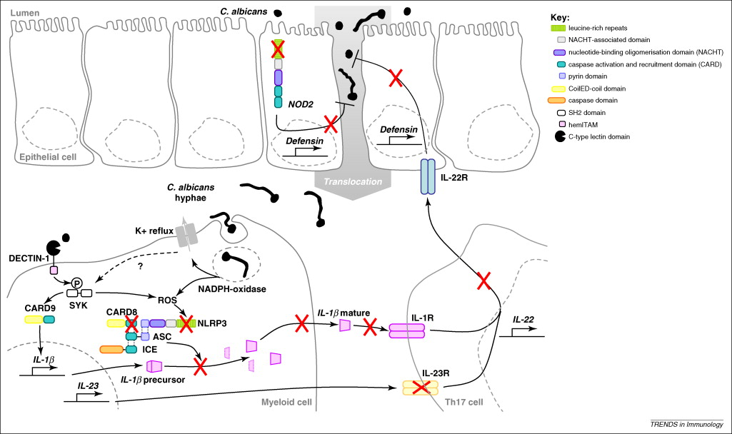 Lessons from the inflammasome: a molecular sentry linking