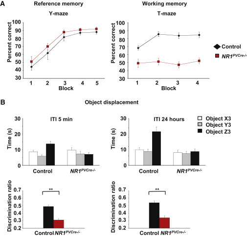 NMDA Receptor Ablation on Parvalbumin-Positive