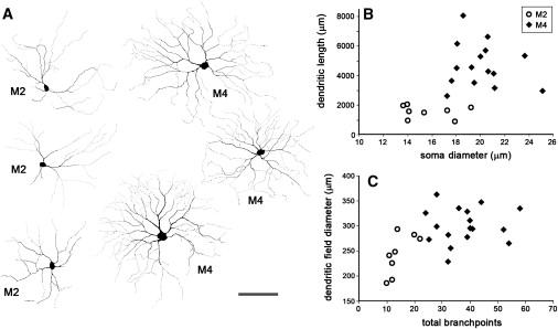 Melanopsin-Expressing Retinal Ganglion-Cell Photoreceptors