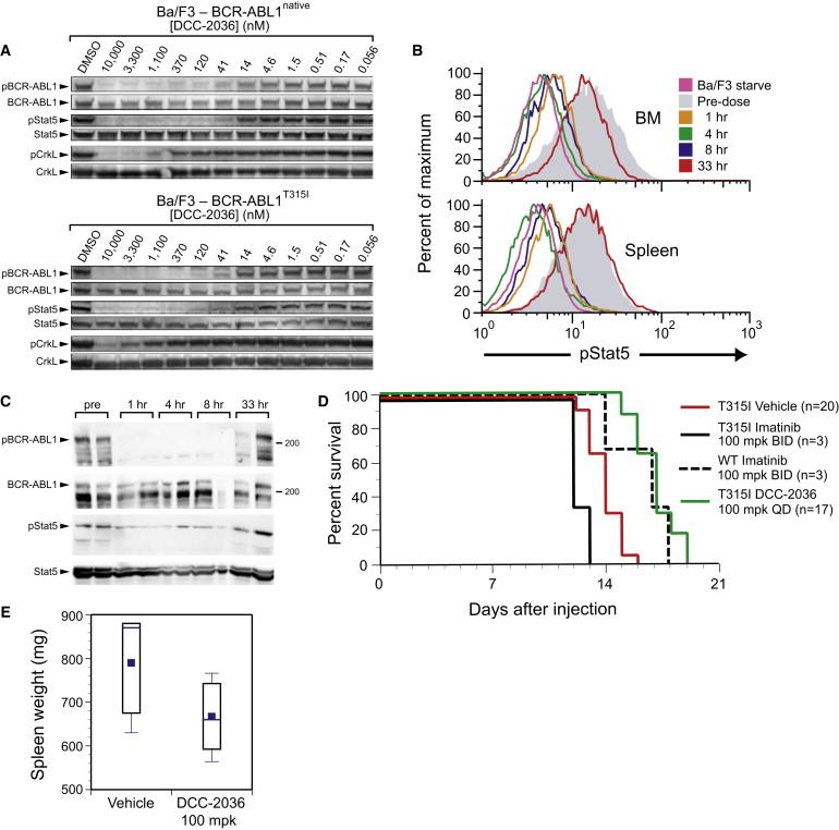 Conformational Control Inhibition of the BCR-ABL1 Tyrosine
