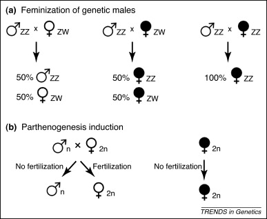 The impact of endosymbionts on the evolution of host sex
