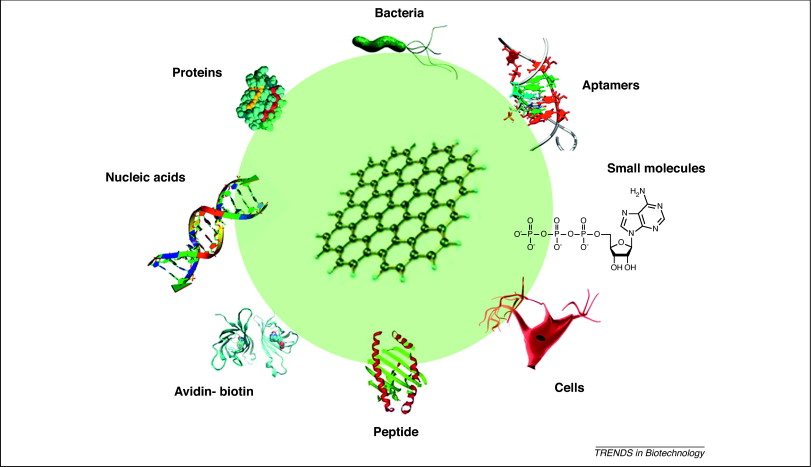 Graphene and graphene oxide biofunctionalization and applications in biotechnology Trends in