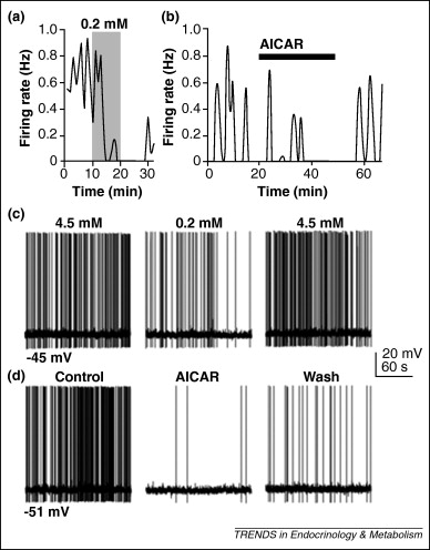 Regulation of gonadotropin-releasing hormone neurons by