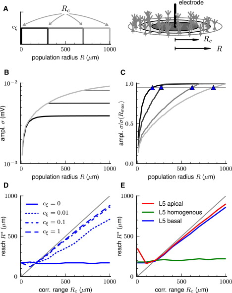 Modeling the Spatial Reach of the LFP: Neuron