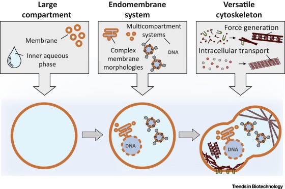 eukaryotic endomembrane system cell diagram tridon thermo fan switch wiring mastering complexity towards bottom up construction of multifunctional synthetic cells trends in biotechnology