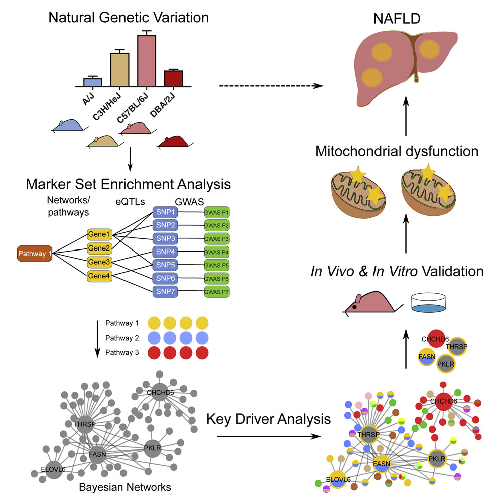 liver panel diagram spark plugins integration of multi omics data from mouse diversity download hi res image