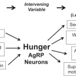 Msh Brain Wiring Diagram 2003 Dodge Ram Headlight Toward A Understanding Of Appetite Control Neuron Review Volume 95 Issue 4 P757 778 August 16 2017