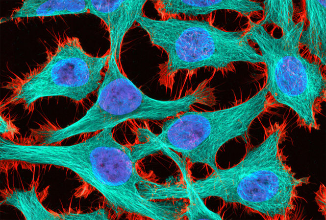 Cell Motility: Cell Press