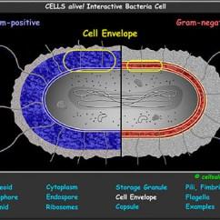 Grade 2 Venn Diagram Worksheets 91 Honda Civic Wiring Interactive Cell Models