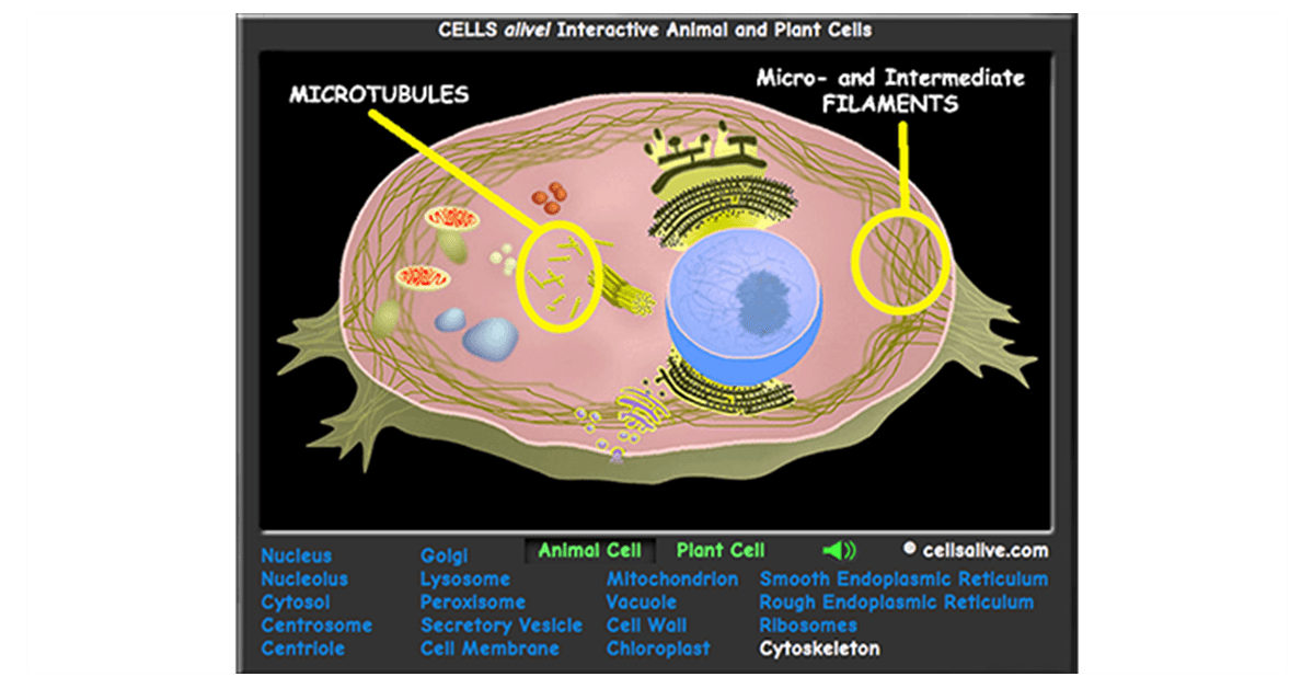 3d Plant Cell Vesicles