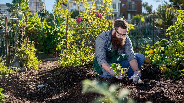 Sustainable business design case study Botanic