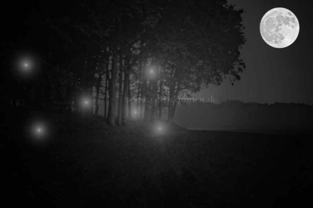 Irrlichter im nächtlichen Wald
