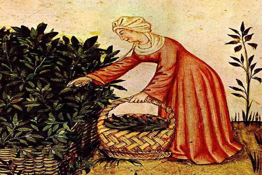 Kräutersammelkalender für den Monat Februar