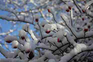 Kräutersammelkalender für den Monat Dezember