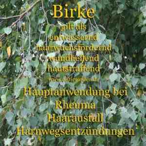 Kräutersteckbrief Birke