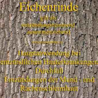 heilbaum_eichenrinde