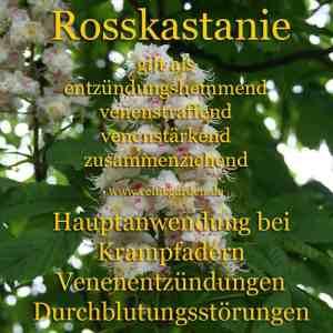 Steckbrief Rosskastanie