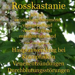 heilbaum_kastaniekl