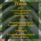 Steckbrief Weide