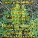 heilpflanze_ackerschachtelh
