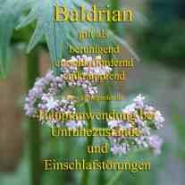 heilpflanze_baldriankl