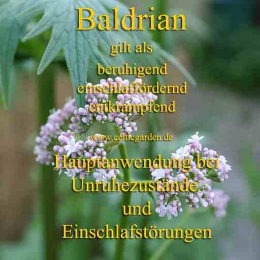 baldrian monographie