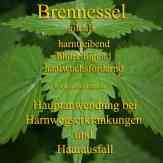 Steckbrief Brennessel