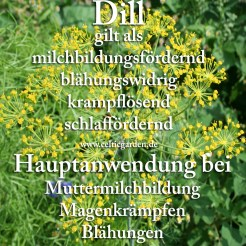 Steckbrief Dill
