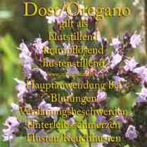 heilpflanze_dost