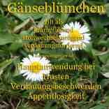 heilpflanze_gänseblümchenkl