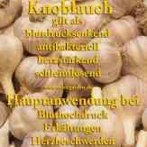 Steckbrief Knoblauch