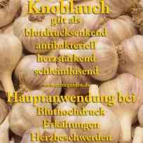 heilpflanze_knoblauch
