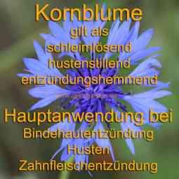 heilpflanze_kornblume