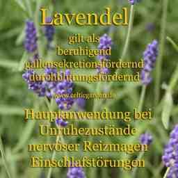 heilpflanze_lavendelkl