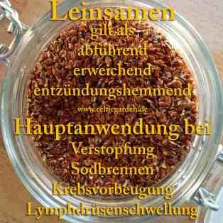 heilpflanze_lein