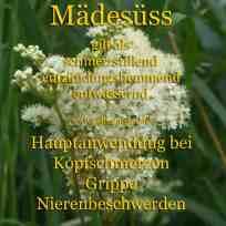 heilpflanze_mädesüsskl