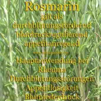 Steckbrief Rosmarin