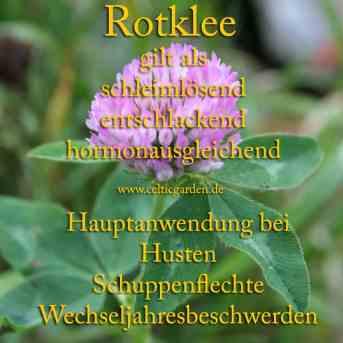 Steckbrief Rotklee