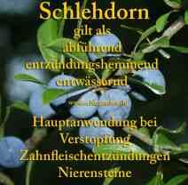 heilpflanze_schlehdorn