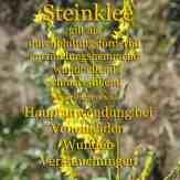 Steckbrief Gelber steinklee