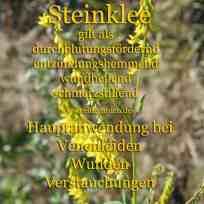 Steckbrief Steinklee