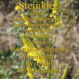 heilpflanze_steinkleekl