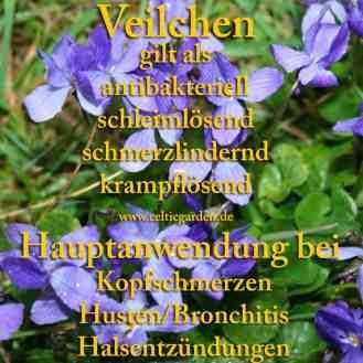 Steckbrief Veilchen