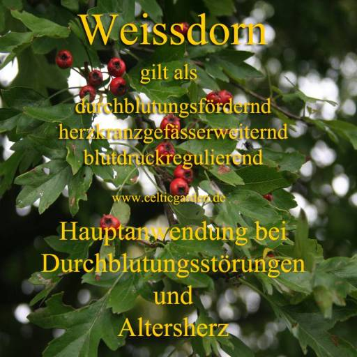 heilpflanze_weissdornkl